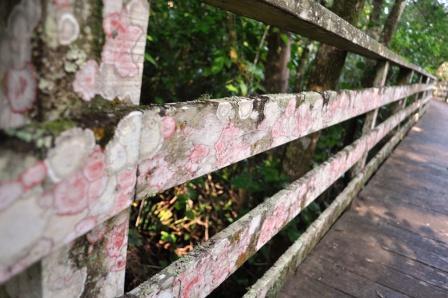 Lichen on Fence, Corkscrew Sanctuary, Naples, Fla.