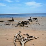 Driftwood at Blackrock Beach, Big Talbot Island State Park