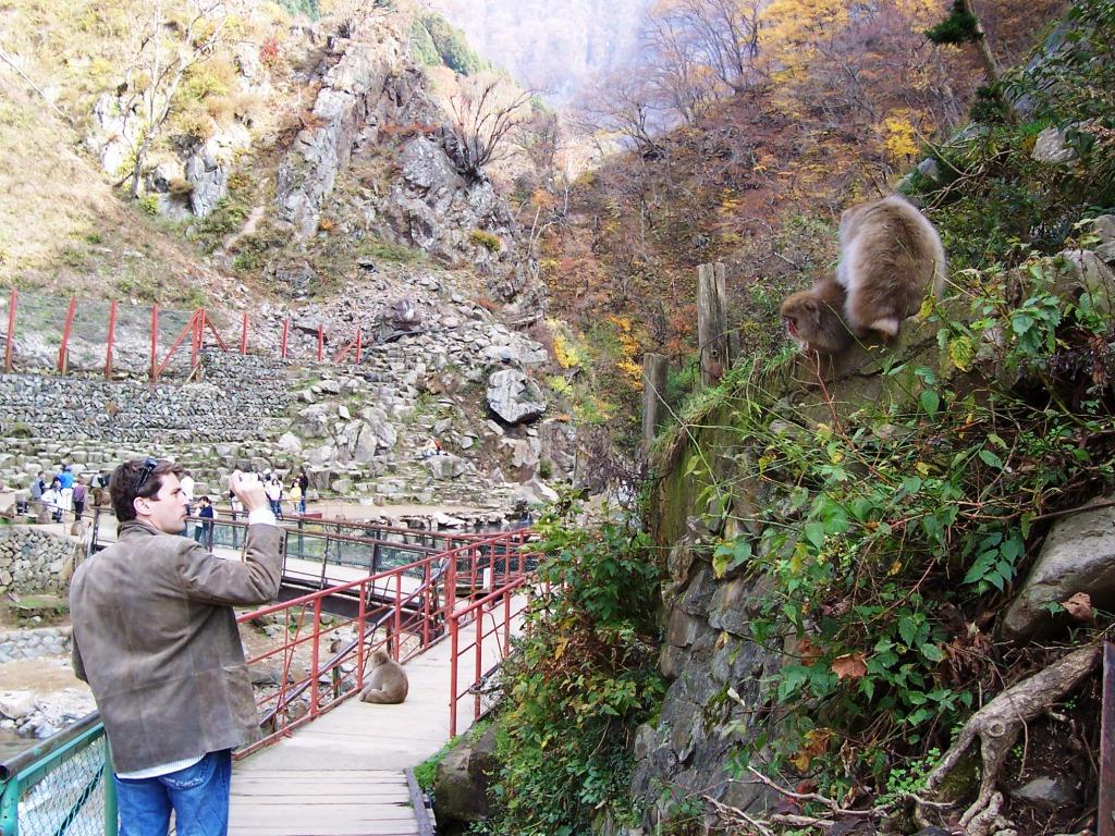 Monkeys Pose for My Friend Matt in Japan's Hell's Valley