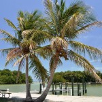 Familiar Trees at Flamingo Marina, Everglades National Park