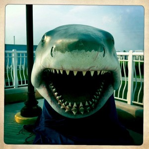 Jaws Makes an Appearance near Laishley Crab House in Punta Gorda, Fla.