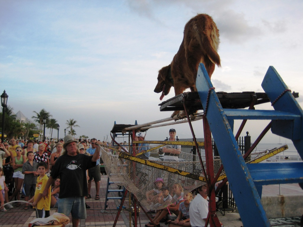 Everyone Who Visits Key West Needs to Watch the Sunset (and Animal Tricks) at Mallory Square