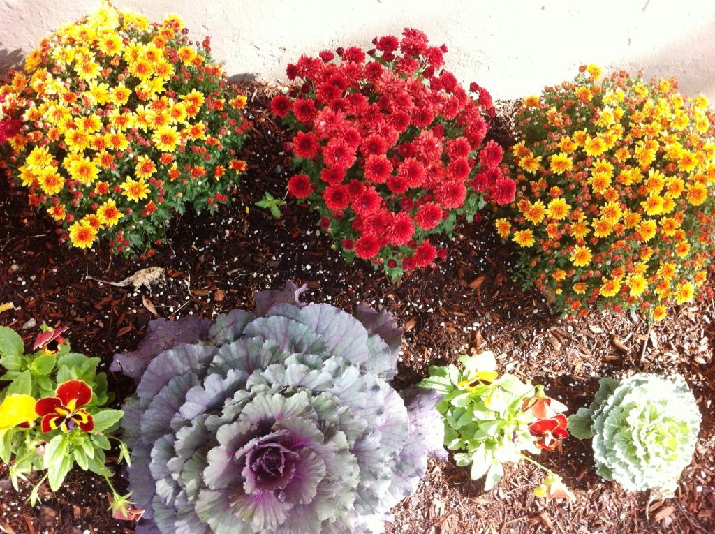 Autumn Flowers, Boston, Oct. 2011