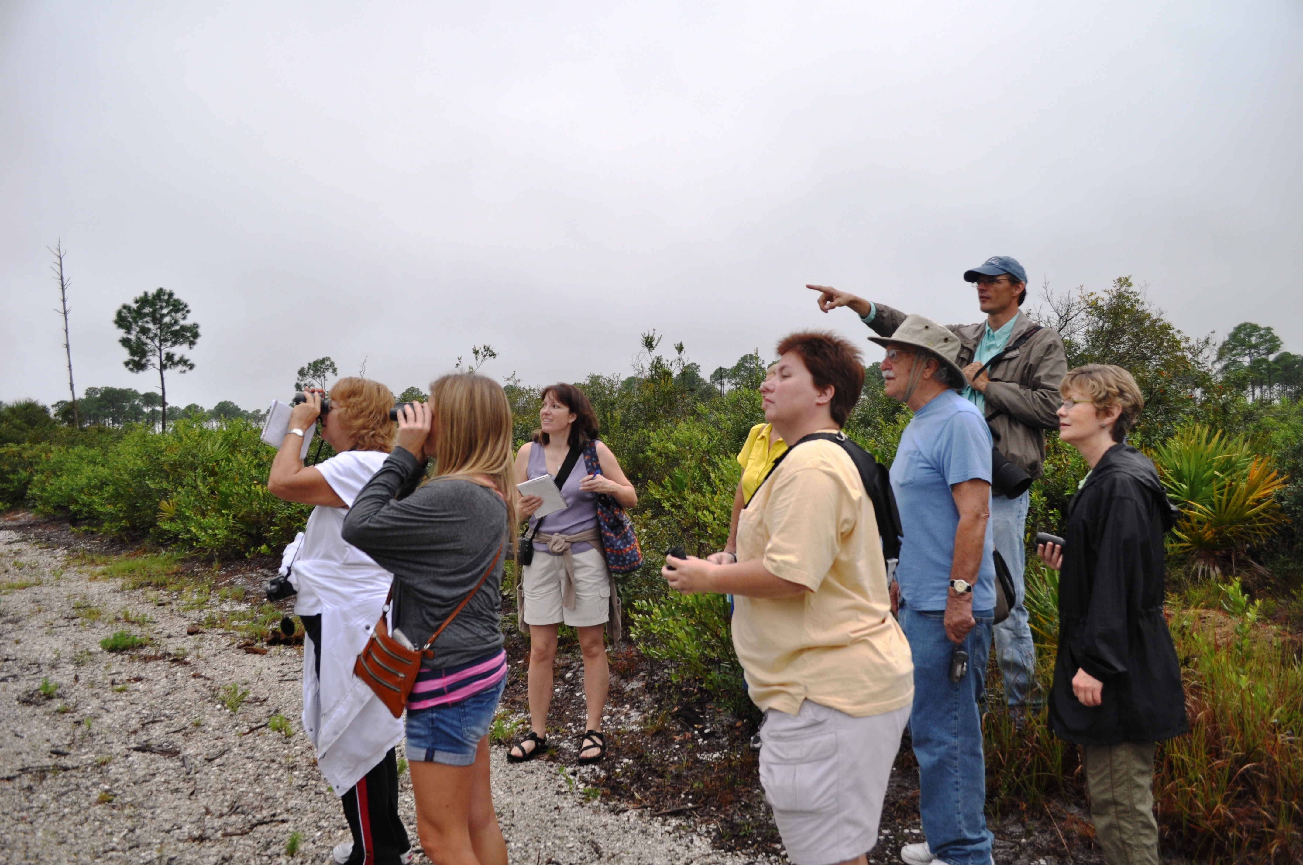 Florida Scrub-Jay Spotted at Tippecanoe Environmental Park, Port Charlotte, Fla.