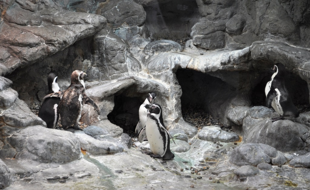 Penguins Chilling at Aquarium of Niagara, Niagara Falls, N.Y.