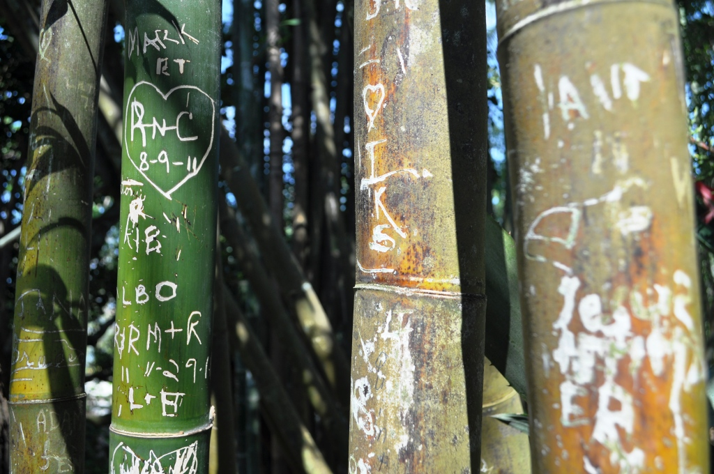 It's Not Cool to do this to Bamboo! Marie Selby Botanical Gardens, Sarasota, Fla.