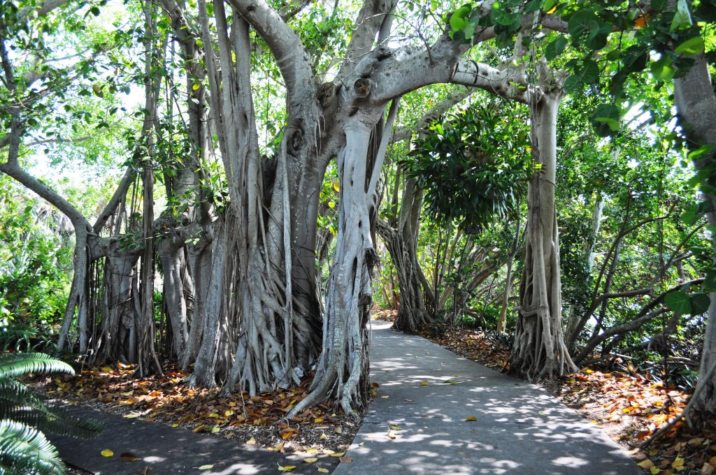 Pretty Walkway at Marie Selby Botanical Gardens