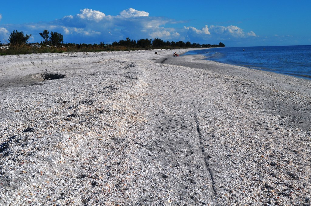 See All the Shells? Sanibel Island, Fla.