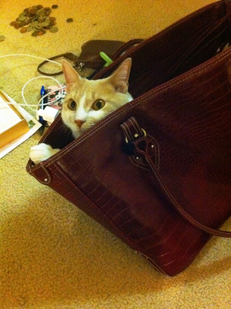 Mom! Can I Go with You? Or Maybe Not.