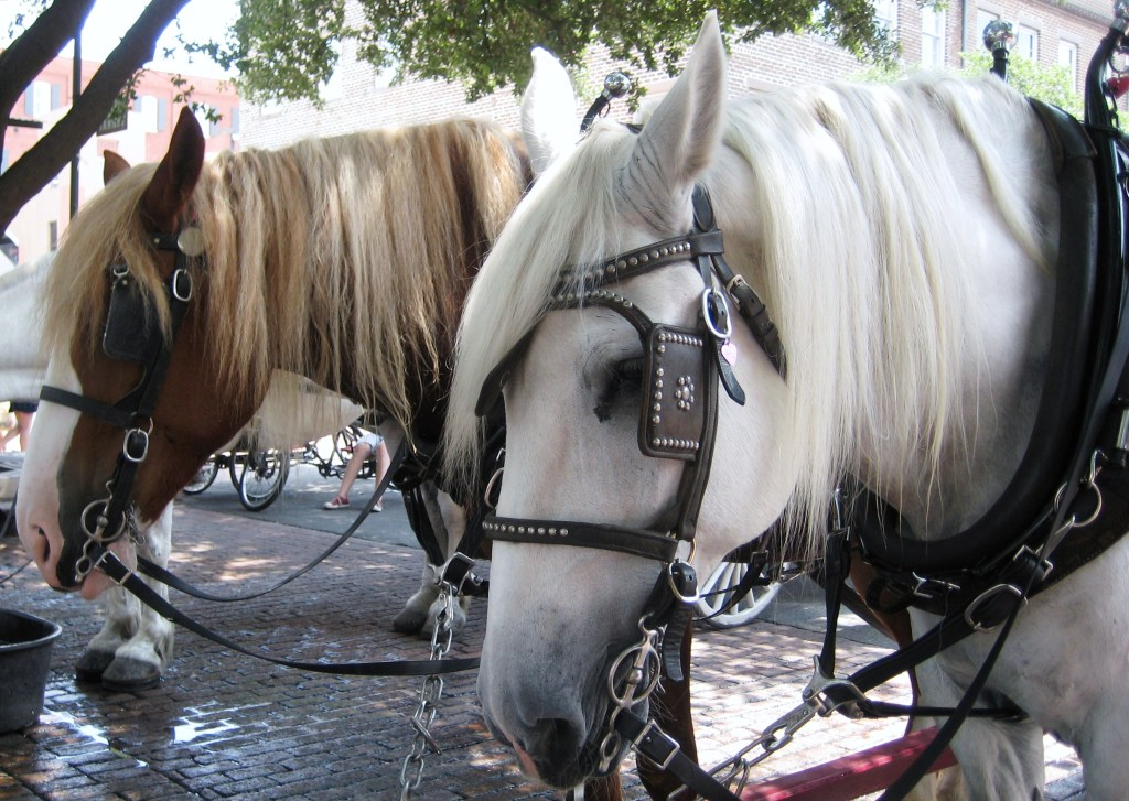 While Visting during the Savannah Food & Wine Festival, Take a Horse-Drawn Carriage Ride