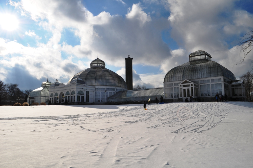 Winter Adventures in Buffalo: Beautiful Botanicals, Father Baker and a Piebald Deer in a Cemetery