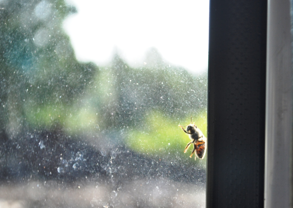 A Honey Bee Tries to Join the Crowd on the Bus