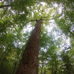 Hugging Trees in Joyce Kilmer Memorial Forest, North Carolina