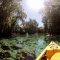 Travel to Florida: My Brief Visit to Three Sisters Springs