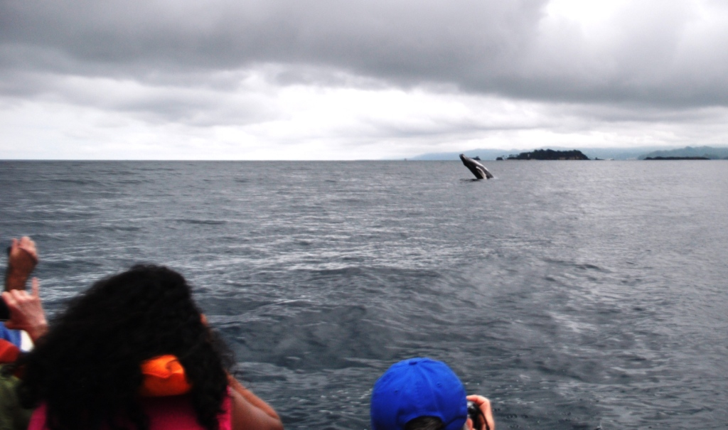 Travel to the Dominican Republic: Whale Watching in Samaná Bay