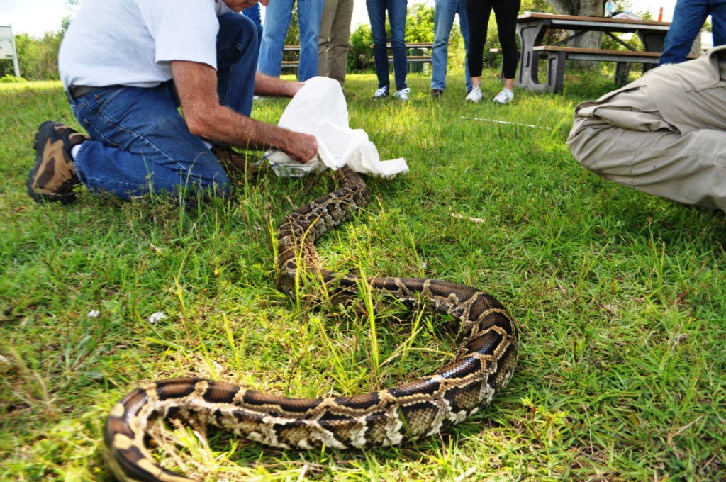 FWC 2016 Python Challenge In-Person Training, Big Cypress National Preserve, Oct. 24, 2015