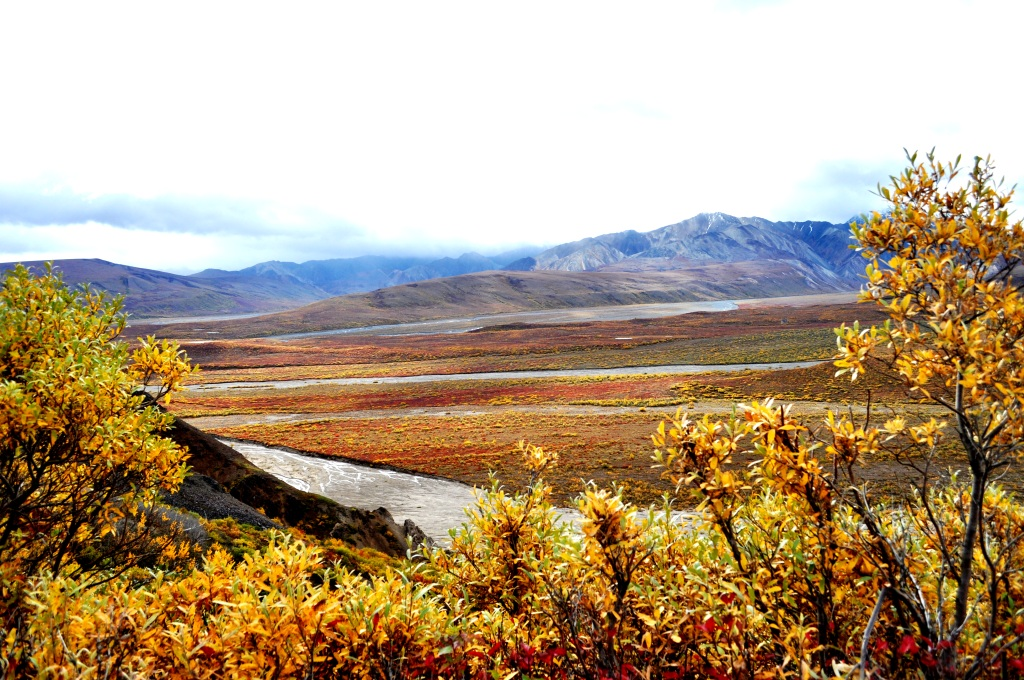 Denali National Park, Alaska, Aug. 2011