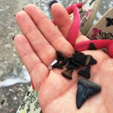 Sometimes, A Gal Needs to Find Some Shark Teeth