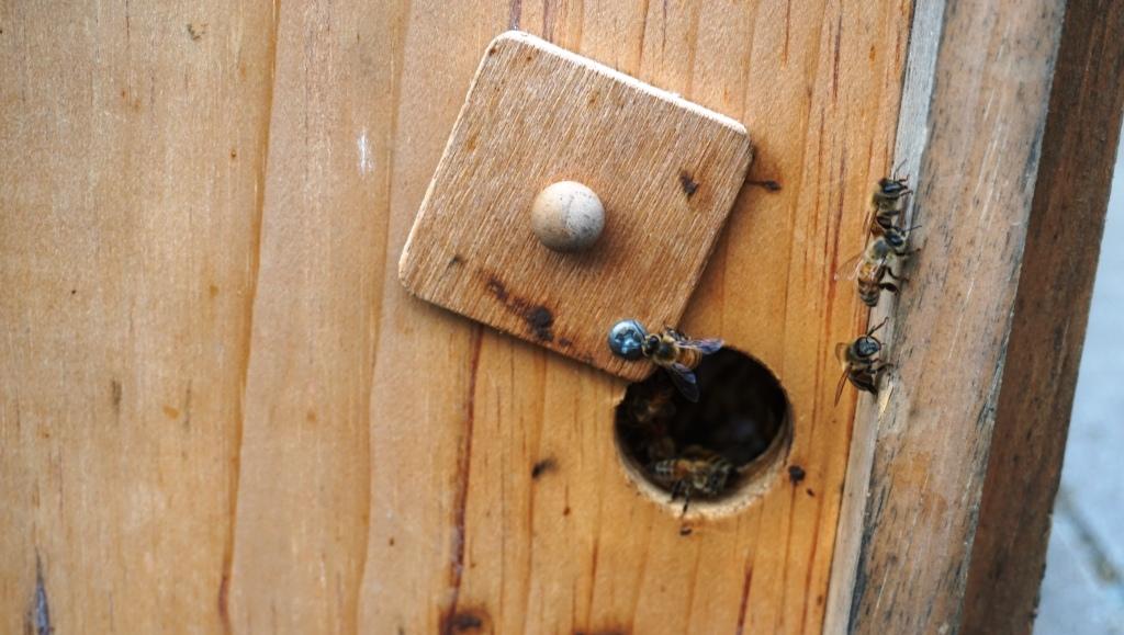 Approximately 100,000 Honey Bees Call the Sofitel Philadelphia Roof Garden Home.