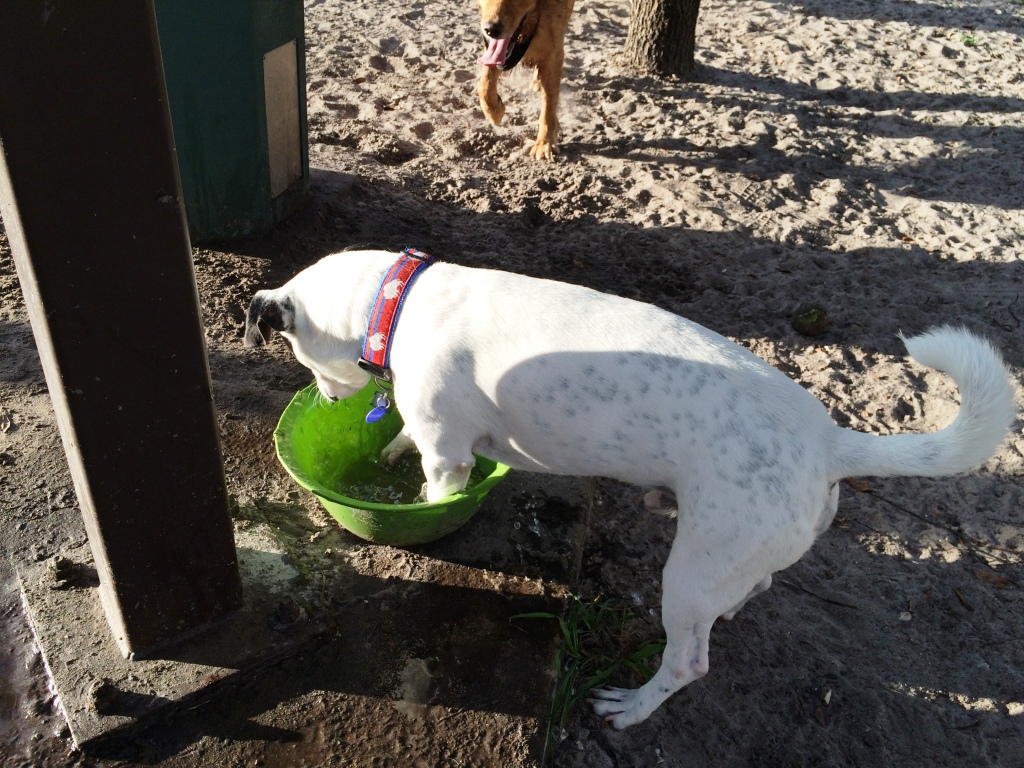 Radcliff at the Dog Park After Diagnosed with Myasthenia Gravis.