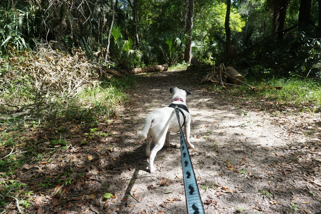 Dog-Friendly Washington Oaks Gardens State Park, Florida. #LoveRadcliff