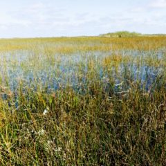 Florida Everglades Open for Business After Hurricane Irma