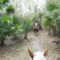 Florida Travel: Riding Lessons and Trail Rides at Horsing Around Ranch in Lake Suzy