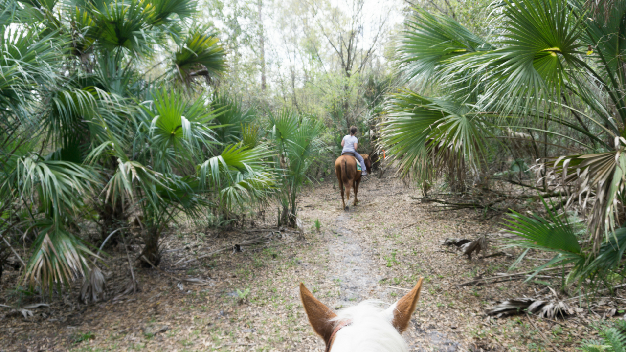 Trail Ride Through Florida Wilderness with Horsing Around Ranch in Lake Suzy, Fla.