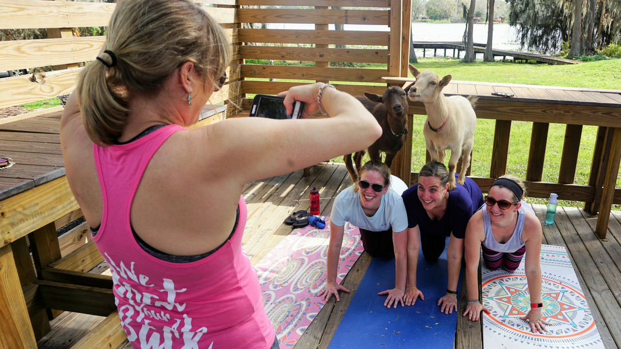 Kelly Diedring Harris, Owner of Goat Yoga Tampa, snaps a photo of Jessica Larsen-Chaney, Laura Quade, and Amy Gallaher of Land O' Lakes after a session of goat yoga at In The Loop Brewing.