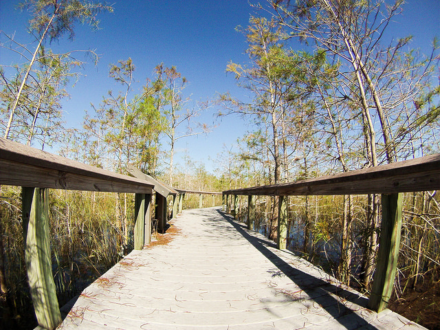 Let a Good Book Inspire Your Next Adventure to Explore Florida