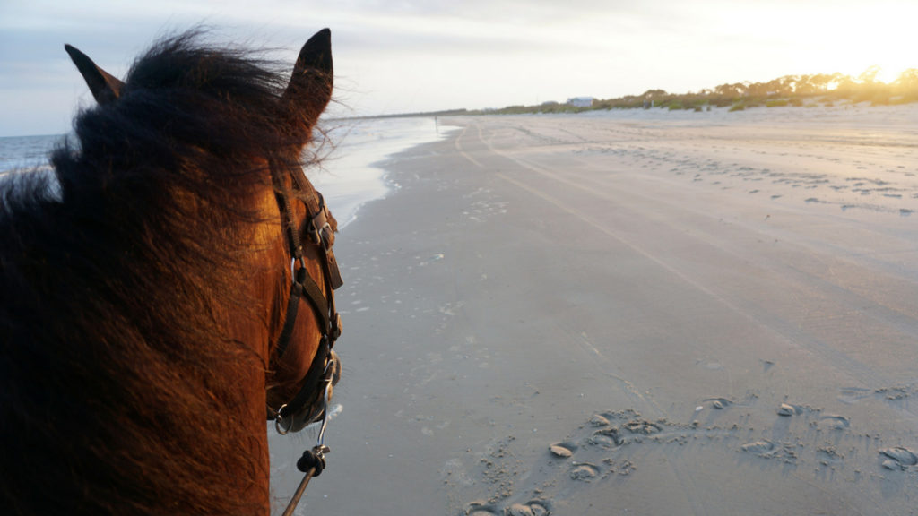 Horseback Riding on the Beach at Cape San Blas, Fla., with Two-Bit Stables, May 18, 2018