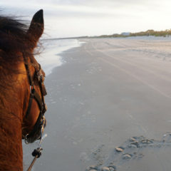Florida Travel: Horseback Riding on the Beach at Cape San Blas
