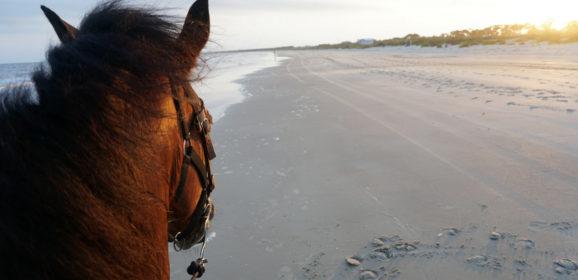 Florida Travel: Horseback Riding on the Beach at Cape San Blas