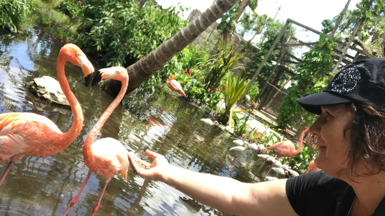 The Feeding Flamingos Selfie at Everglades Wonder Gardens, Bonita Springs, Fla.