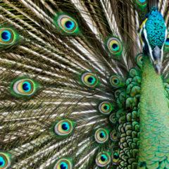 Florida Travel: Flocking to Everglades Wonder Gardens