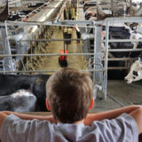 Florida Travel: A Mooo-velous Time at Dakin Dairy Farms
