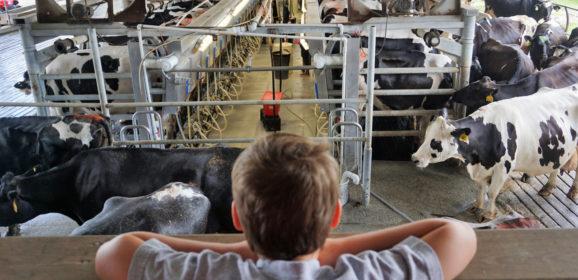 Florida Travel: A Mooo-velous Time at Dakin Dairy Farms