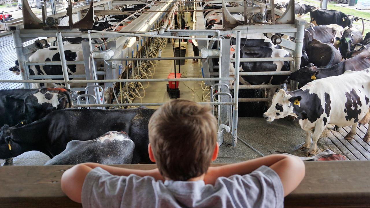 Overlooking Dakin Dairy's Milking Operation, Myakka City, Fla.