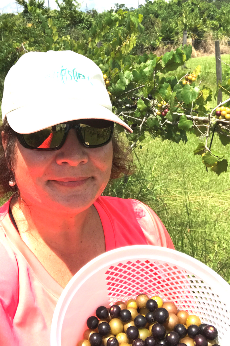 That's Me with My Grape Haul at Henscratch Farms, Lake Placid, Fla.
