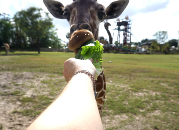 CityPASS Helped Me Do Something Special with Someone Special at Busch Gardens Tampa Bay