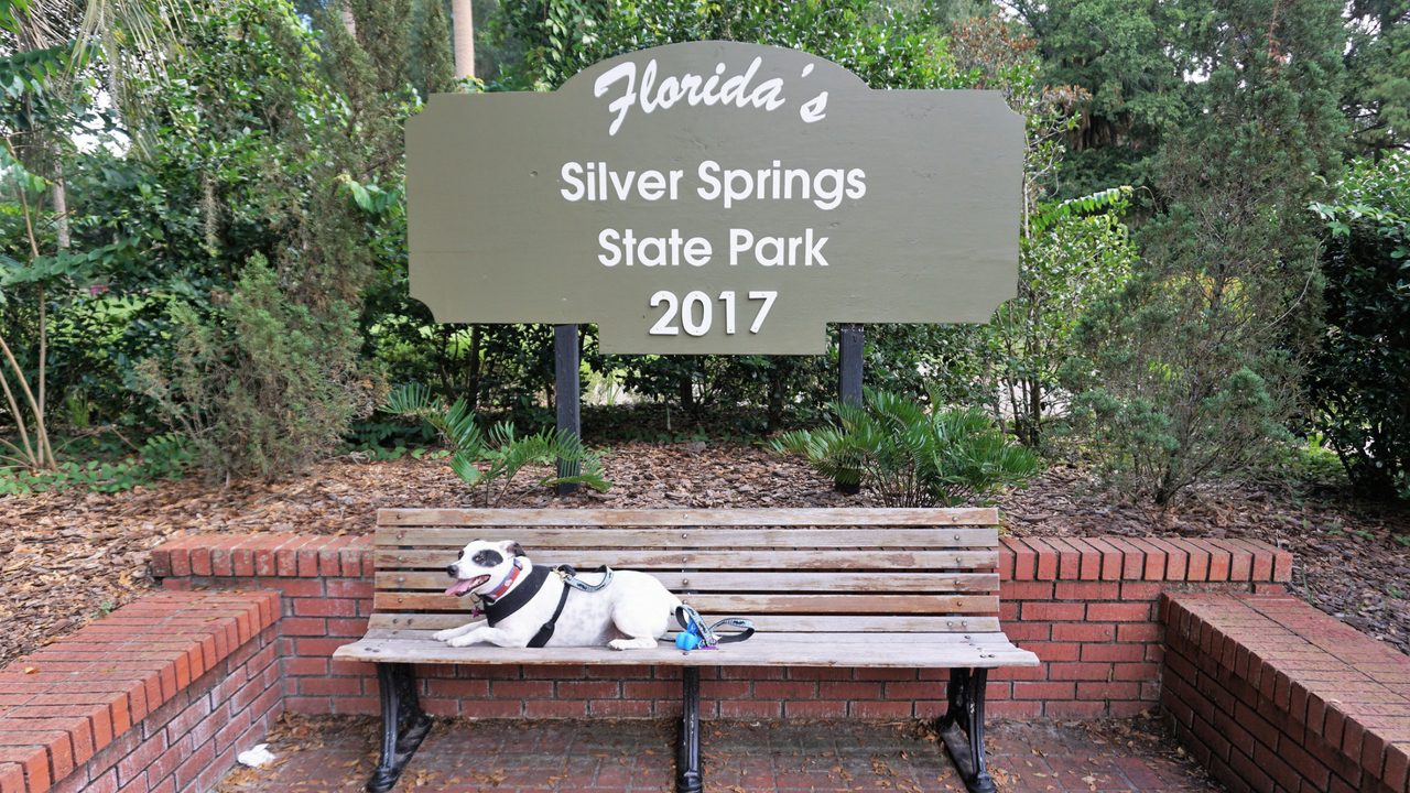 Radcliff Takes Advantage of a Photo Opp at Dog-Friendly Silver Springs State Park in Ocala, Fla., Aug. 2017