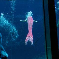 Florida Travel: Spending Time with Weeki Wachee's Mermaids