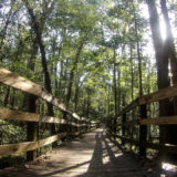 Discover South Carolina: Congaree National Park with a Dog