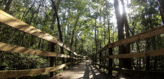 Discover South Carolina: Congaree National Park with a Dog