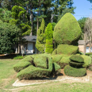 Discover South Carolina: Pearl Fryar Topiary Garden, A Yard of Dreams
