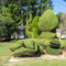 Discover South Carolina: Pearl Fryar Topiary Garden, A Yard of Dreams