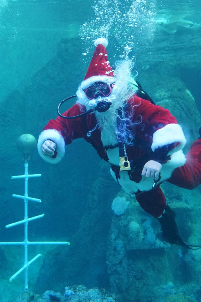 Santa Makes an Underwater Appearance at the Clearwater Marine Aquarium During Winter's Wonderland.