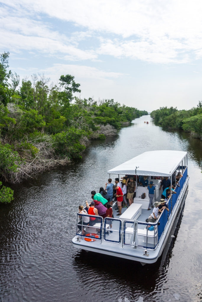 The Bald Eagle II Backcountry Cruise Going Up the Buttonwood Canal and Spots an American Crocodile, Flamingo, Everglades National Park, Fla. Nov. 2018.