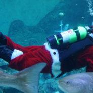 Fun & a Bit Quirky Florida Holiday Celebrations
