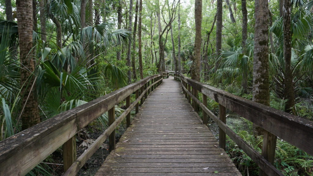 Step Into the New Year with a Florida State Park Ranger on a Guided Hike.